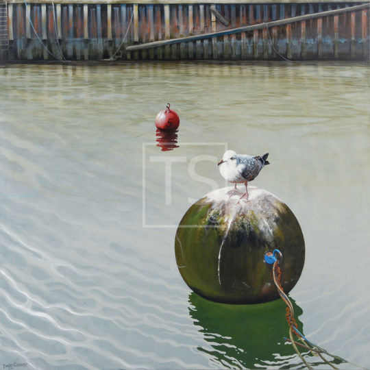 Harbour-gull